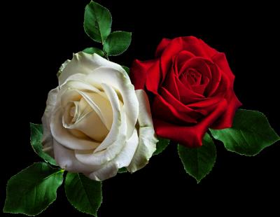 розы (400x310, 125Kb)