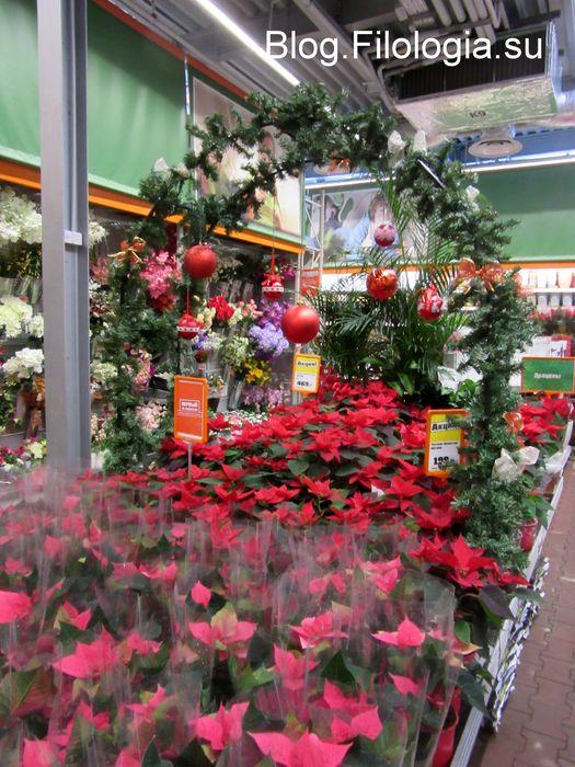 Красные цветы к Новому году в магазине OBI (525x700, 89Kb)