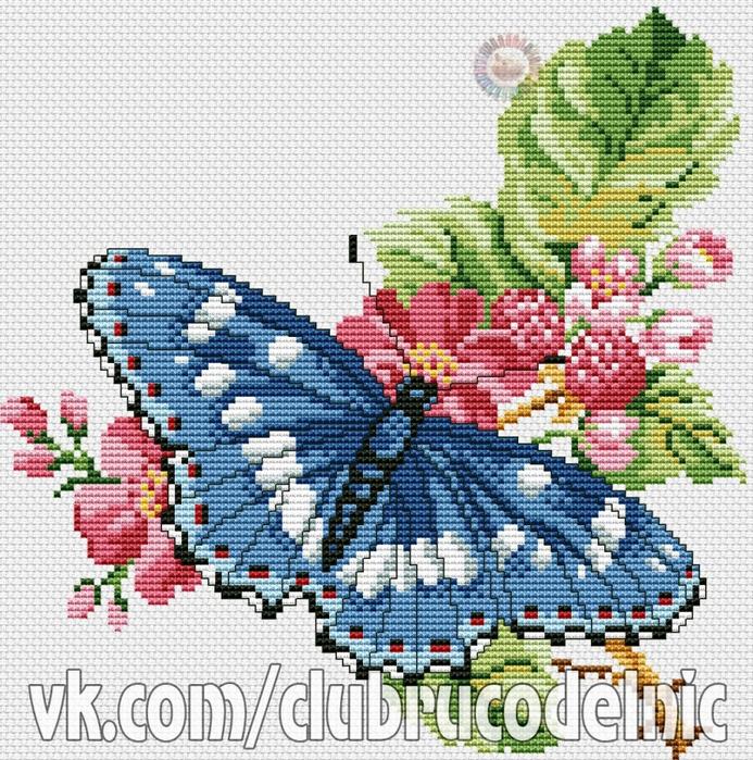5630023_Butterflies (693x700, 481Kb)