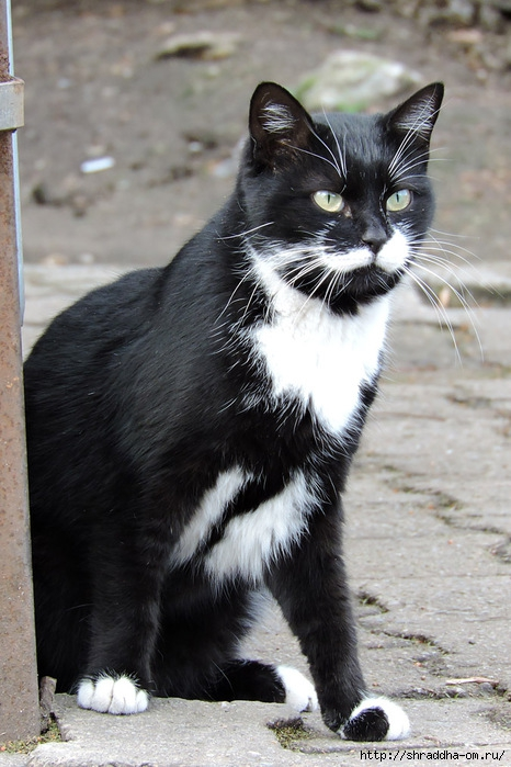 Котик (18) (466x700, 229Kb)