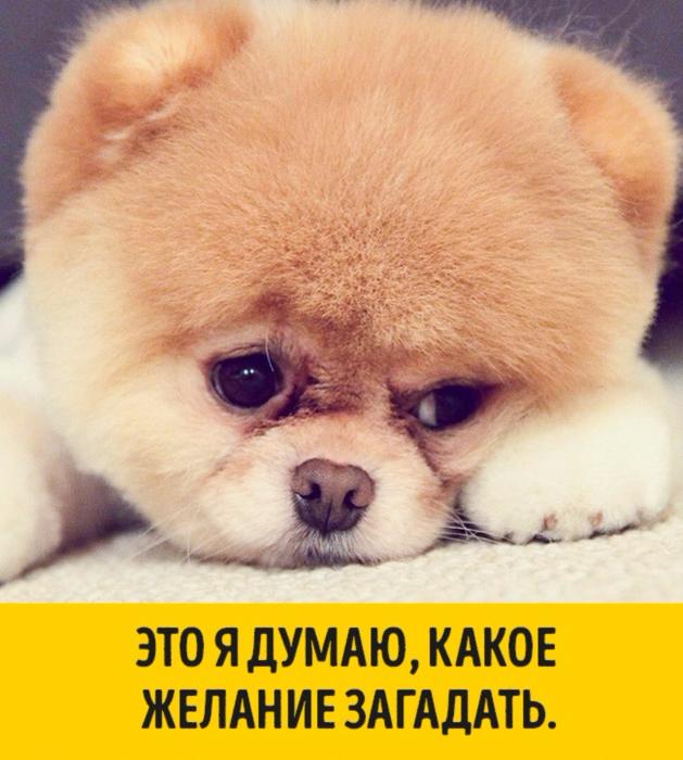 1451505531_07 (629x700, 453Kb)