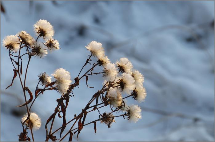 зимние цветы (700x462, 258Kb)