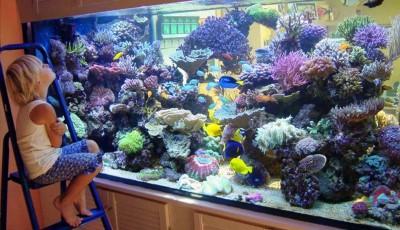рыбки (400x230, 135Kb)