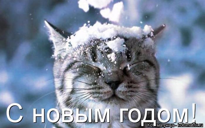kotomatritsa_tg (700x436, 282Kb)