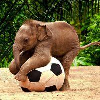 Слонёнок и мяч/4645991_slonenok (200x200, 13Kb)