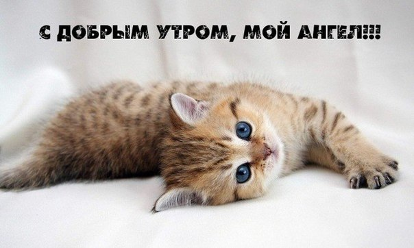 утро/3881693_koshka01 (604x362, 43Kb)