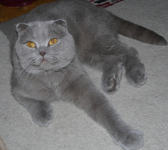 2016-01-08 22-37-30 Наши подопечные здоровые и не очень более 42 кошек(22хроника) 2собаки у одной эпилепсия у 2й рак, хорёк (566x507, 464Kb)