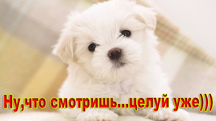 image (11) (700x393, 245Kb)