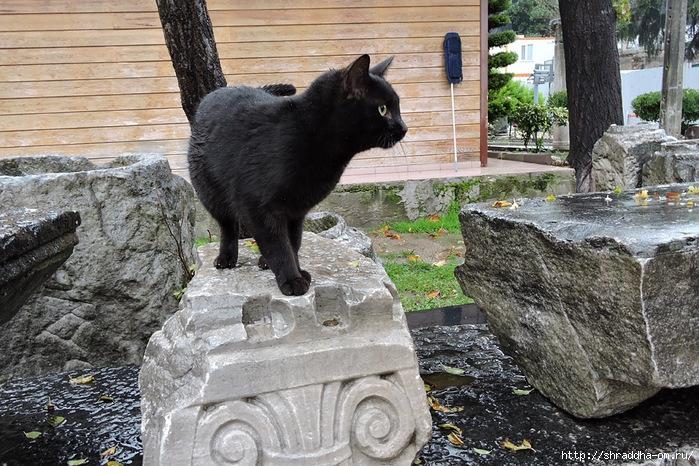 Котик (12) (700x466, 345Kb)