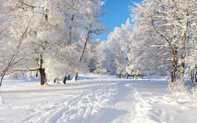 снег (640x400, 221Kb)