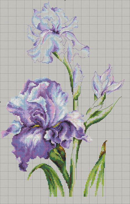 Irises_DMC (448x700, 266Kb)
