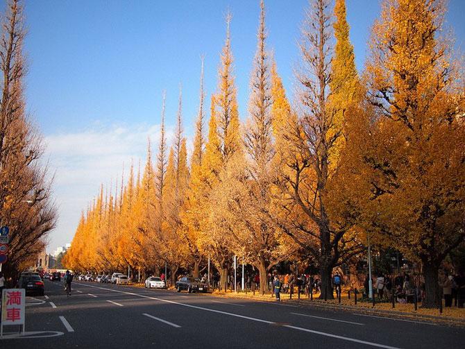 аллея деревьев кинго токио 1 (670x503, 383Kb)
