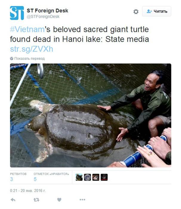Умерла гигантская 300-летняя черепаха, символ Ханоя