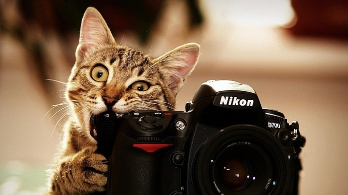 Animals___Cats_Cat_chews_Nikon_camera_098119_ (700x393, 64Kb)