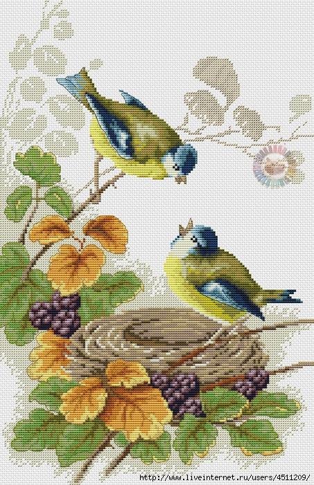 Птички у гнезда (453x700, 372Kb)