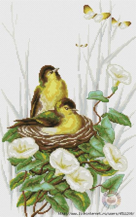 Птички в гнезде (439x700, 342Kb)
