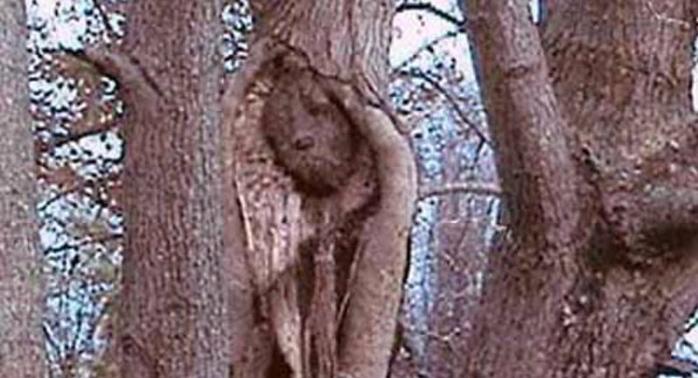 Странно-причудливые деревья 24 (700x378, 246Kb)