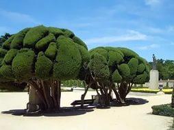 Странно-причудливые деревья 21 (254x190, 45Kb)