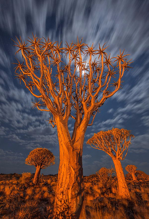 Странно-причудливые деревья 12 (476x700, 436Kb)