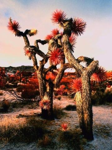 Странно-причудливые деревья 7 (360x480, 217Kb)