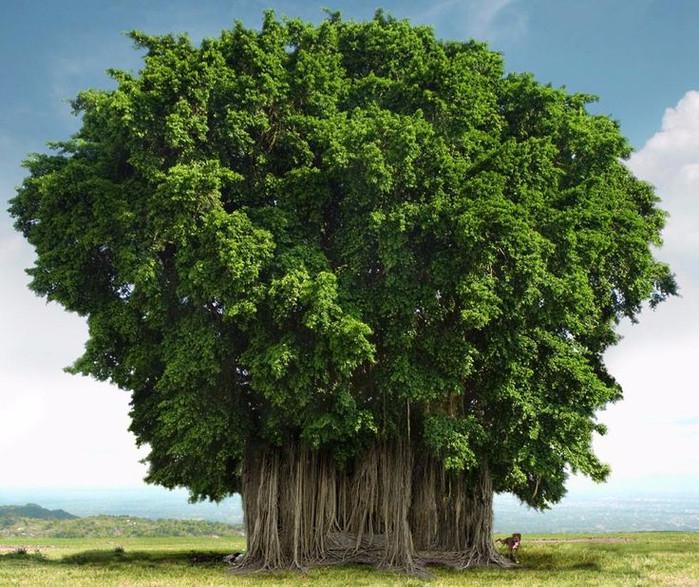 Странно-причудливые деревья (699x587, 493Kb)