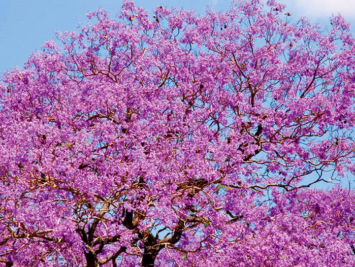 Странно-причудливые деревья 33 (700x526, 675Kb)