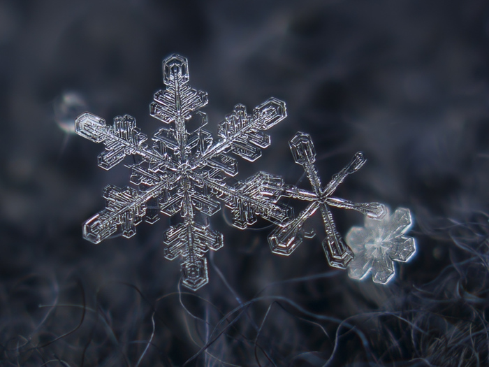 The-Forest-Magazine_Alexey-Kljatov-snowflake_0005 (700x525, 170Kb)