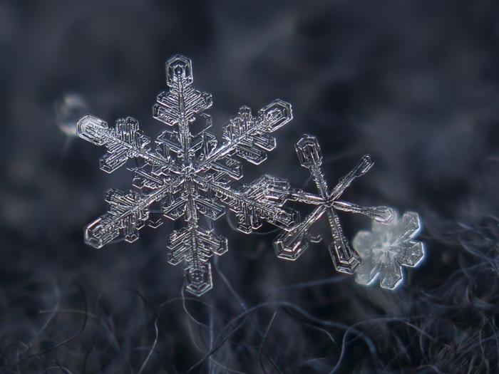 The-Forest-Magazine_Alexey-Kljatov-snowflake_0005 (700x525, 170Kb)