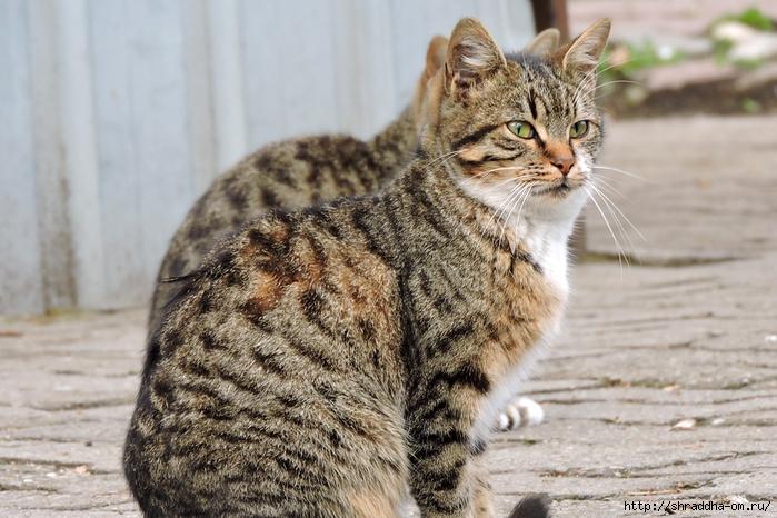 Котик (16) (700x466, 276Kb)