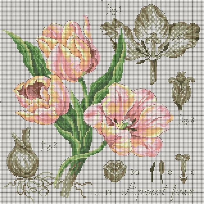 Etude_a_la_Tulipe_Aprikot_Foxx_DMC (700x700, 452Kb)
