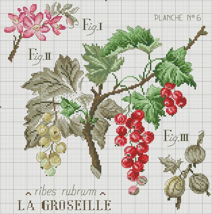 Etude_aux_Groseilles_DMC (695x700, 472Kb)
