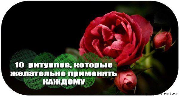 4403711_getImage (604x325, 93Kb)