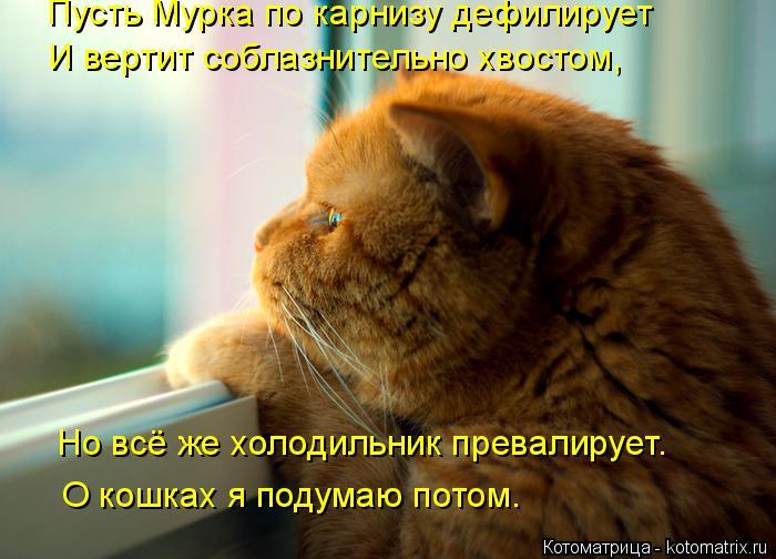 kotomatritsa_6s (700x504, 323Kb)