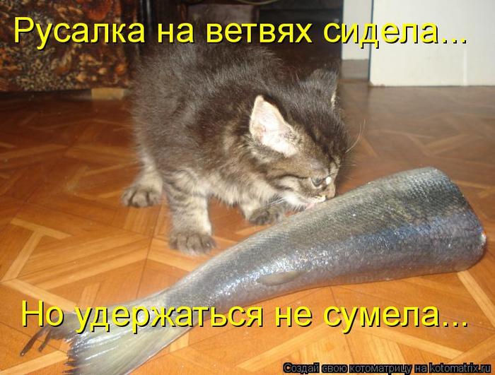 kotomatritsa_C (700x531, 393Kb)