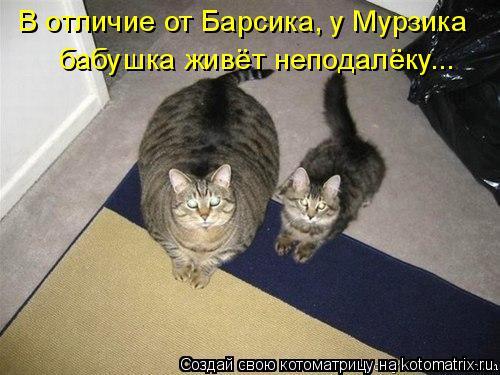 kotomatritsa_gx (500x375, 170Kb)