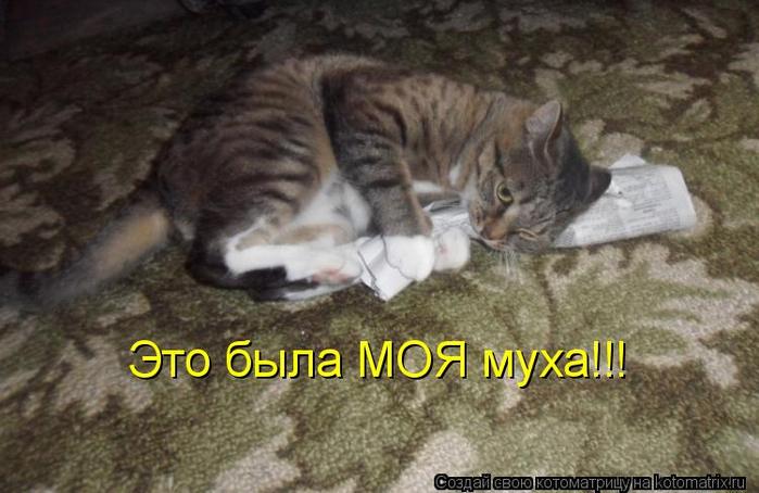 kotomatritsa_jk (700x454, 284Kb)