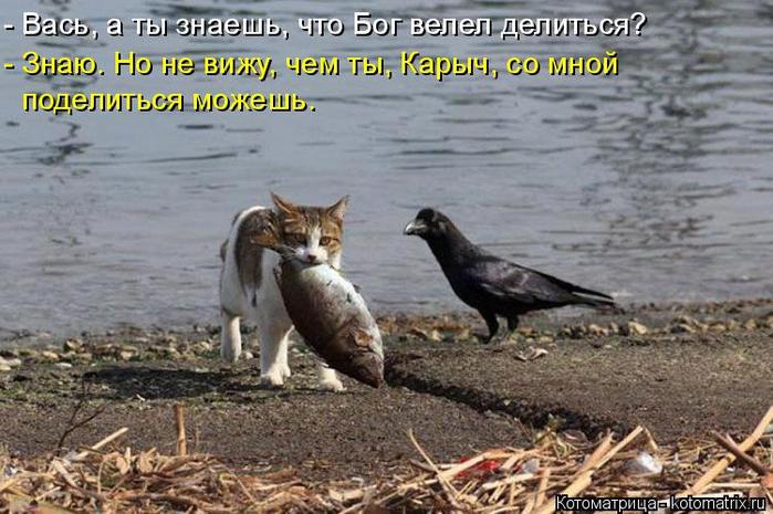 kotomatritsa_k (700x465, 349Kb)