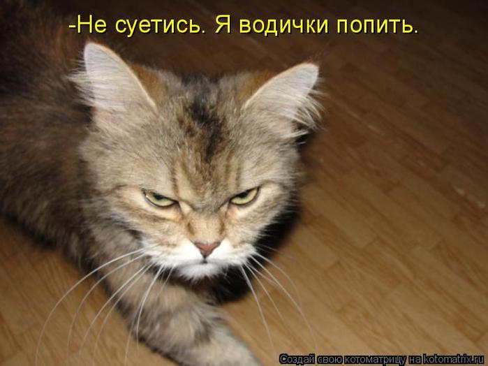 kotomatritsa_lv (700x524, 281Kb)