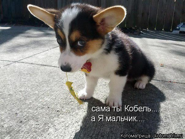 kotomatritsa_S6 (604x453, 245Kb)