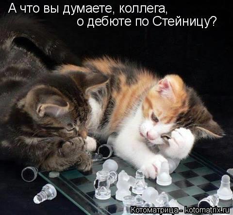 kotomatritsa_TU (480x443, 141Kb)