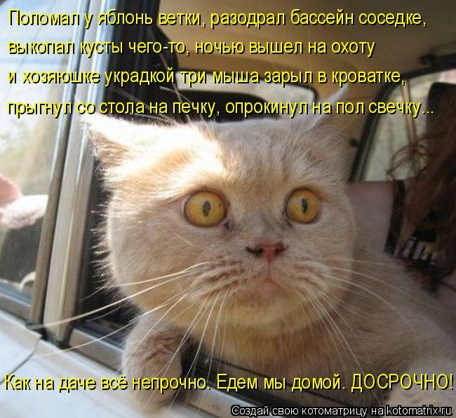 kotomatritsa_Xm (650x596, 386Kb)