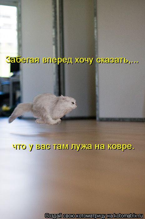 kotomatritsa_zC (464x700, 181Kb)