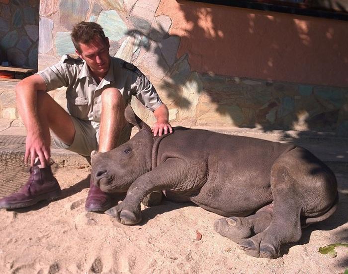 gertje-baby-rhino-rescue-hoedspruit-enda (700x553, 163Kb)