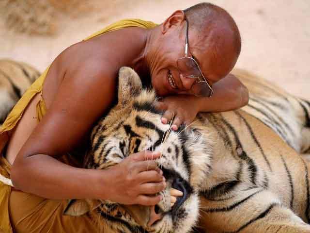 человек и тигр (640x480, 22Kb)