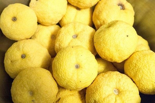Юзу Японский лимон (604x402, 226Kb)