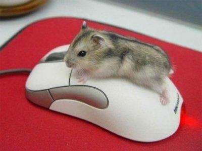 adorable-cute-mouse-mouse-on-mouse-favim-com-110447 (400x298, 27Kb)