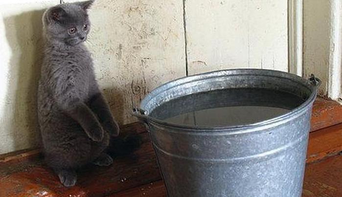 мокрые коты17 (700x403, 175Kb)