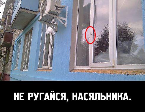 Дом-2. юмор.. обсуждение на liveinternet - российский сервис.