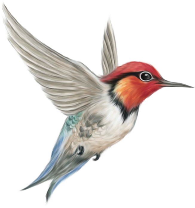 34473978_1225317963_BeeHummingbird (653x699, 1019Kb)