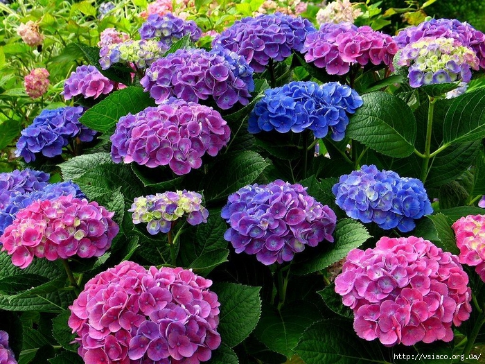 Советы любителям цветов